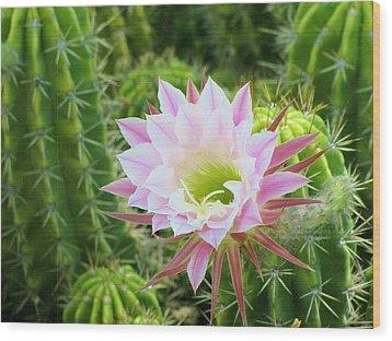 Delicate Bloom Wood Print by FeVa  Fotos