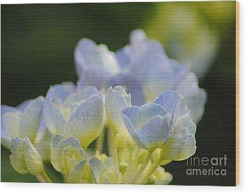 Delicate Bloom Wood Print