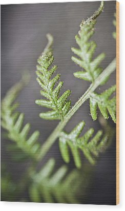 Wood Print featuring the photograph Delicate by Carole Hinding