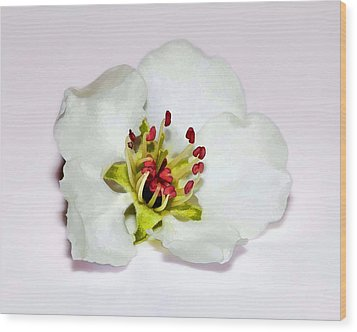 Delicate Cherry Blossom Wood Print by Tracie Kaska