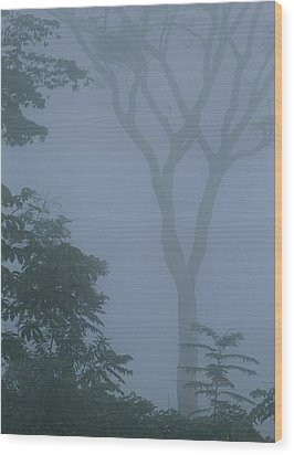 Delicate Trees Appear Out Of The Mist Wood Print by Mattias Klum