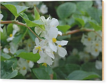 Wood Print featuring the photograph Delicate White Flower by Jennifer Ancker