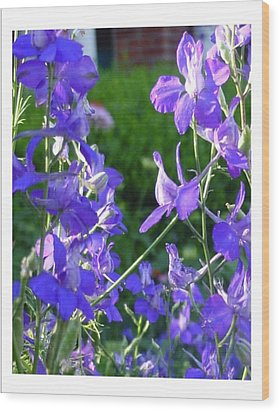 Wood Print featuring the photograph Delicately Blue by Frank Wickham
