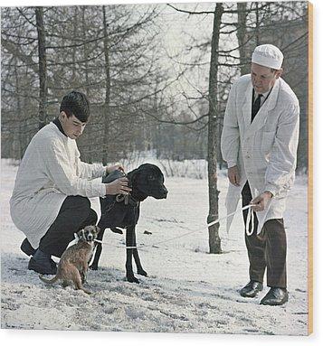 Demikhov's Laboratory Dogs, 1967 Wood Print by Ria Novosti