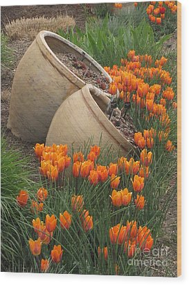 Denver Botanic Planters Wood Print by Michelle H