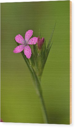 Wood Print featuring the photograph Deptford Pink by JD Grimes