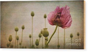 Depth Of Poppy Field Wood Print by Priska Wettstein
