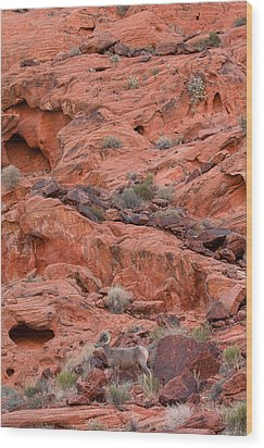Desert Bighorn And Landscape Wood Print by Nathan Mccreery