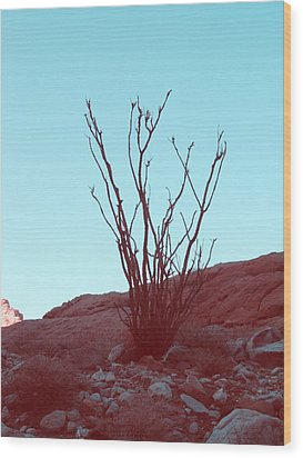 Desert Plant Wood Print by Naxart Studio