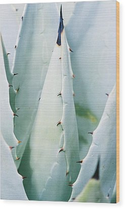 Desert Safety Wood Print by