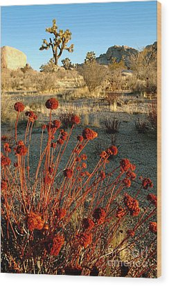 Wood Print featuring the photograph Desert Surprise by Johanne Peale