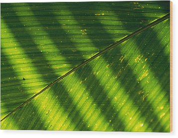 Detail Of A Large Leaf With Shadows Wood Print by Bill Curtsinger