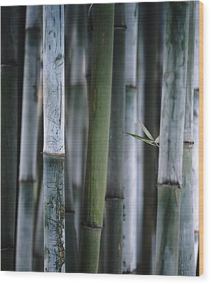 Detail Of Green Bamboo In Bamboo Park Wood Print by Axiom Photographic