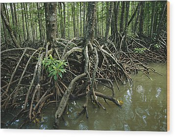 Detail Of Mangrove Roots At The Waters Wood Print by Tim Laman