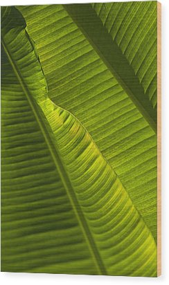 Detail Of Palm Tree Barbados Wood Print by Axiom Photographic