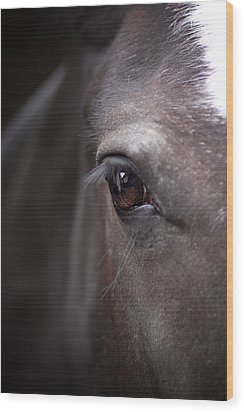 Detailed Close Up Of Black Horse's Eye Wood Print