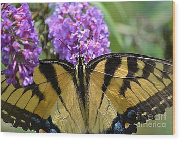 Detailed Wings Wood Print by Kathy Gibbons