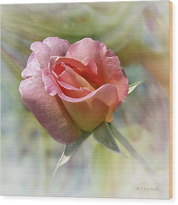 Dew Drop Pink Rose Wood Print