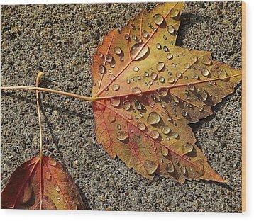 Dew On The Maple Leaf Wood Print