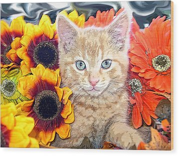 Di Milo - Sun Flower Kitten With Blue Eyes - Kitty Cat In Fall Autumn Colors With Gerbera Flowers Wood Print by Chantal PhotoPix