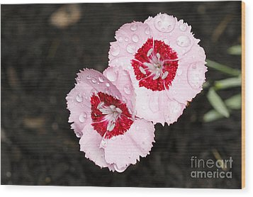 Dianthus Flowers Wood Print by Denise Pohl