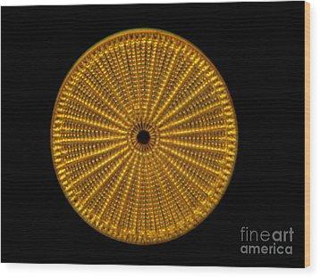 Diatom Alga, Arachnoidiscus Wood Print by Eric Grave