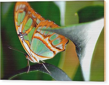 Wood Print featuring the photograph Dido Longwing Butterfly by Peggy Franz