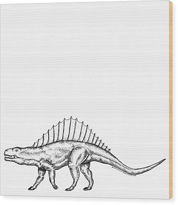 Dimetrodon - Dinosaur Wood Print by Karl Addison