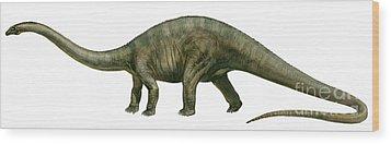Diplodocus, A Prehistoric Era Dinosaur Wood Print by Sergey Krasovskiy