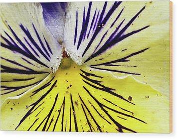 Dirty Pansy Wood Print by Jennifer Smith
