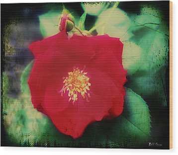 Dirty Rose Knows Wood Print by Bill Cannon