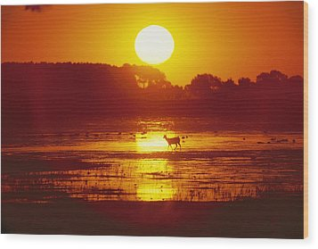 Distant Deer Silhouetted In A Marsh Wood Print by Amy White & Al Petteway