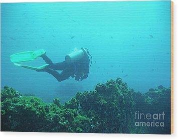 Diver By Rocks On Ocean Floor Wood Print by Sami Sarkis