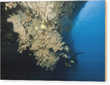Diver Next To A Coral Fan Sheltering Wood Print by Tim Laman