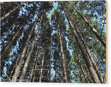 Wood Print featuring the photograph Dizzy In The Pines by Rachel Cohen