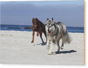 Doberman And Husky Play Wood Print by Renae Laughner