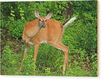 Doe A Deer Wood Print by Karol Livote