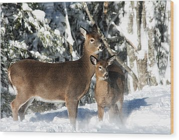 Wood Print featuring the photograph Doe A Deer by Nancy Dempsey