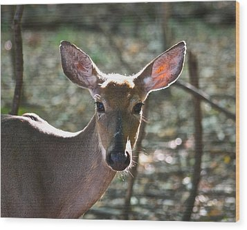 Doe Profile 9734 Wood Print by Michael Peychich