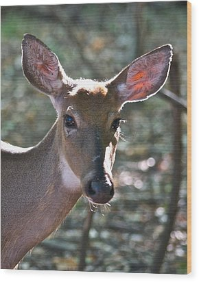 Doe Profile 9736 Wood Print by Michael Peychich