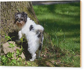 Dog And Tree Wood Print