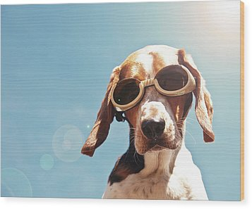 Dog In Goggles With Sun Flare Wood Print by Darren Boucher
