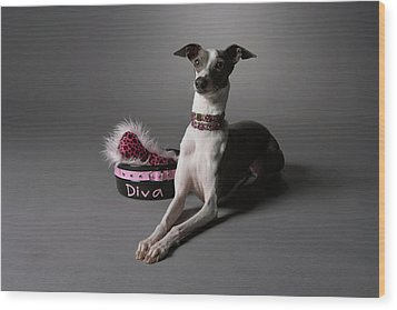 Dog In Sitting Position With Diva Bowl Wood Print by Chris Amaral