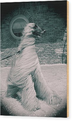 Dog In The Wind.  Wood Print by Giancarlo Sherman