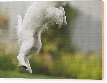 Dog Jumps Wood Print by Richard Wear