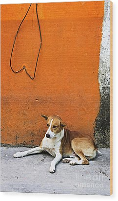 Dog Near Colorful Wall In Mexican Village Wood Print by Elena Elisseeva