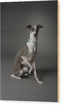 Dog Sitting With One Leg Up Wood Print by Chris Amaral