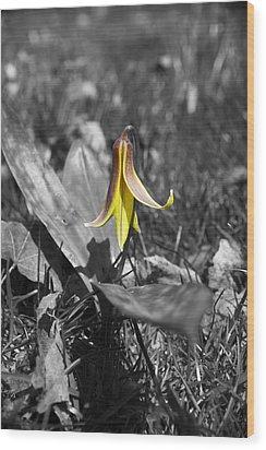 Dog Tooth Violet Wood Print by Elaine Mikkelstrup