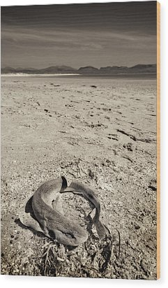 dogfish at Newborough Beach Wood Print by Meirion Matthias
