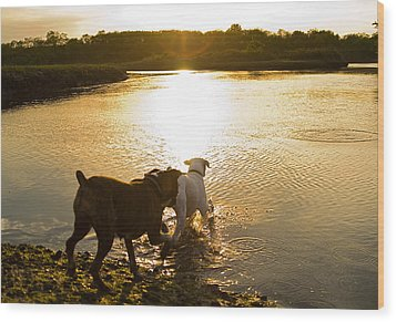 Dogs At Sunset Wood Print by Stephanie McDowell